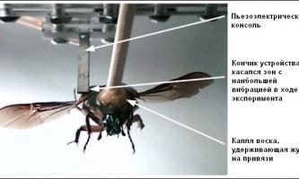 Жуки-кіборги будуть самі себе забезпечувати електроенергією