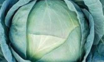 Зимові сорти капусти