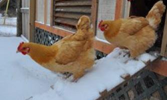 Зимовий курник: основні вимоги та поетапне будівництво