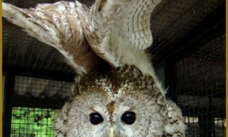 Зловмисники зламали вольєр з совами