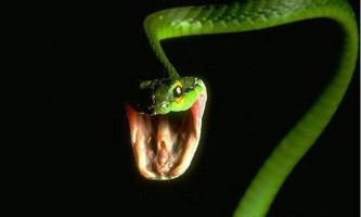 Змії на вулицях москви налякали городян