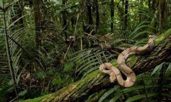 Змії (serpentes)