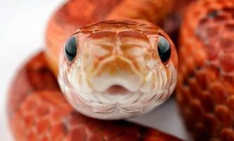Зміїне кафе в токіо набирає все більшої популярності