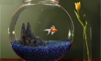 Золоті рибки: сумісність з іншими рибками