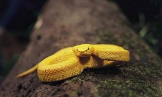 Золоті тварин: 10 істот, яким природа подарувала дорогоцінну зовнішність